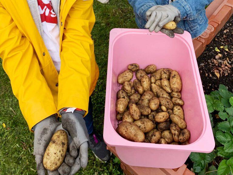 Kartoffelernte06_VS72